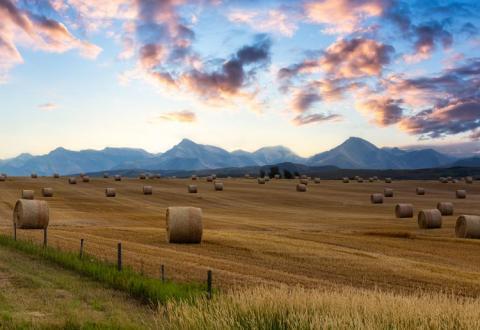 Alberta field
