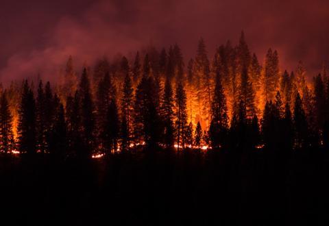 wildfire crisis